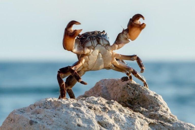 GrandCrab Ransomware: la fin d'une gloire?