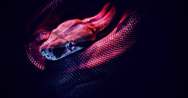 En savoir plus sur Snake Ransomware